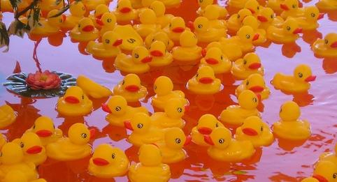 Duck Game at Marin (CA) County Fair